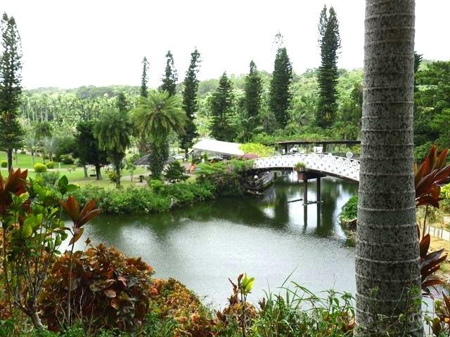 東南植物楽園の釣り堀池
