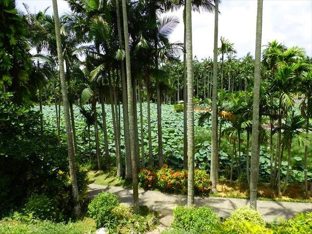 東南植物楽園ハス池全景