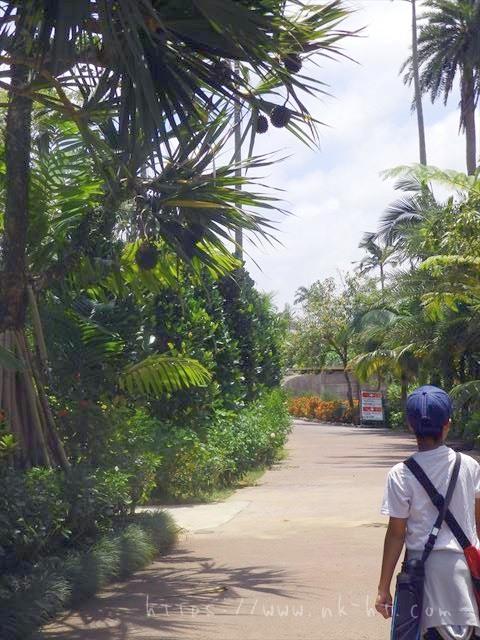 東南植物楽園の植物園エリア道路
