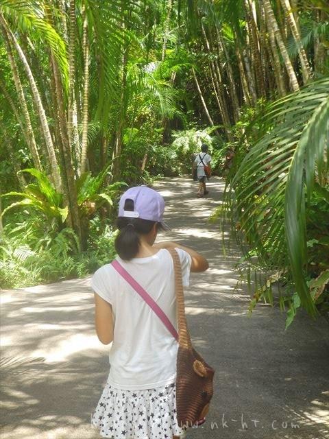 東南植物楽園の植物園エリアユスラヤシ並木