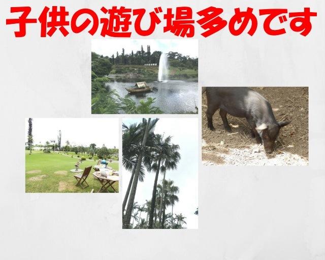 東南植物楽園の遊び場