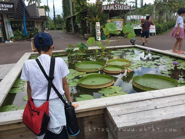 東南植物楽園の入り口付近の池